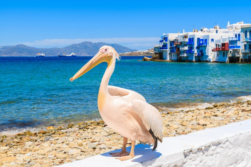 Mykonos Holiday Package 6 days